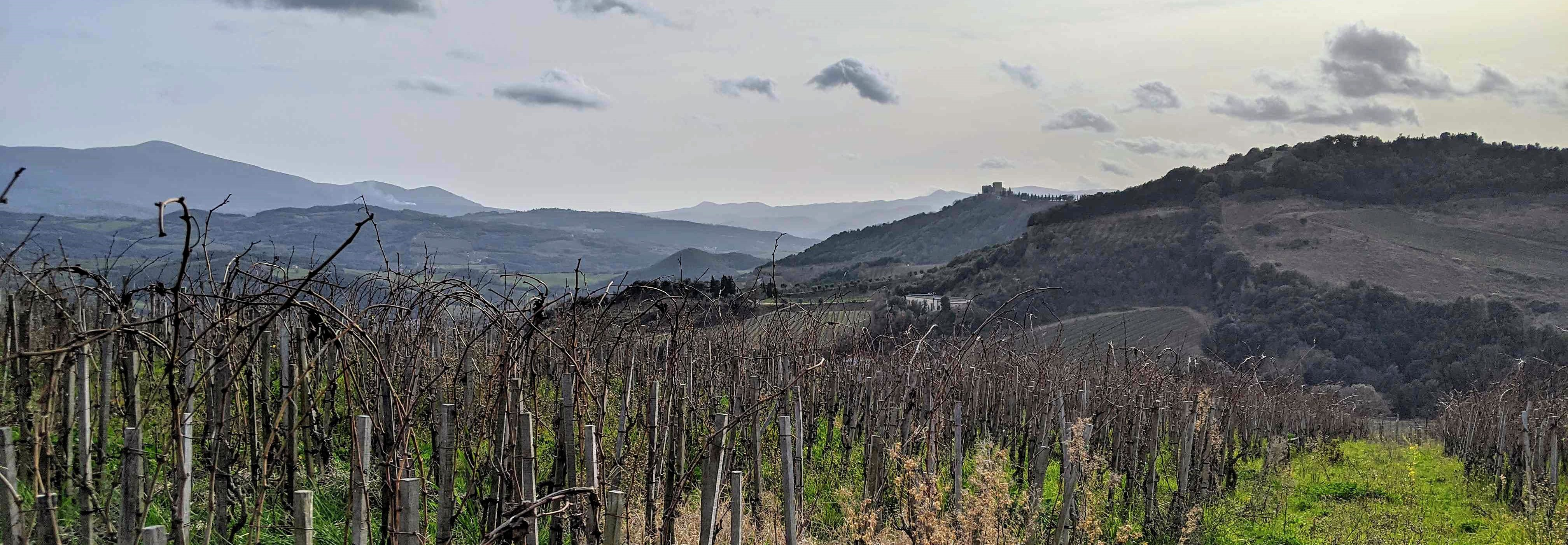 vineyard Podere Le Ripi in Montalcino