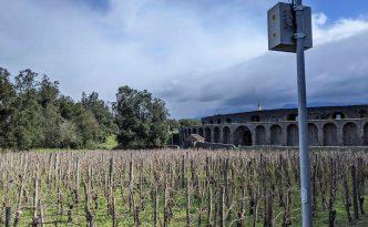 vineyard pompeii