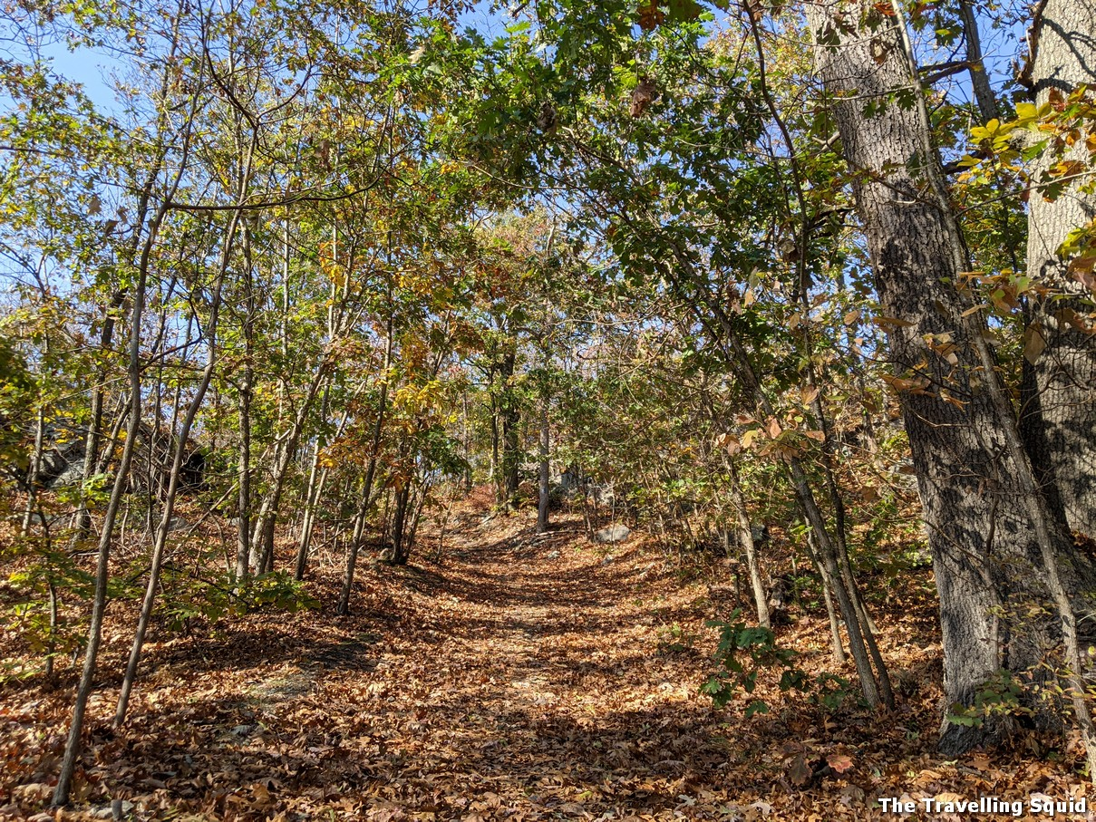 middlesex fells reservation in fall